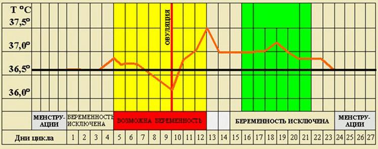 Базальная температура тела при беременности