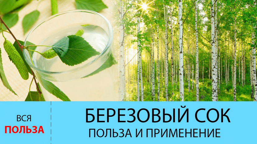 Польза березового сока или чем полезен березовый сок