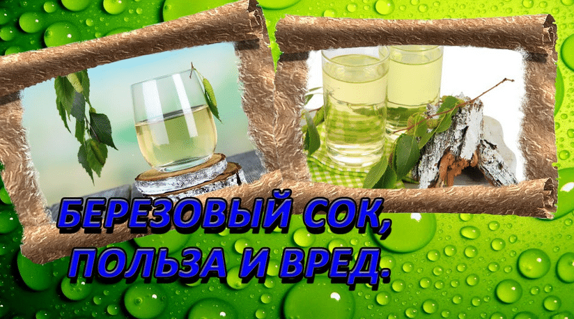 Вред берёзового сока