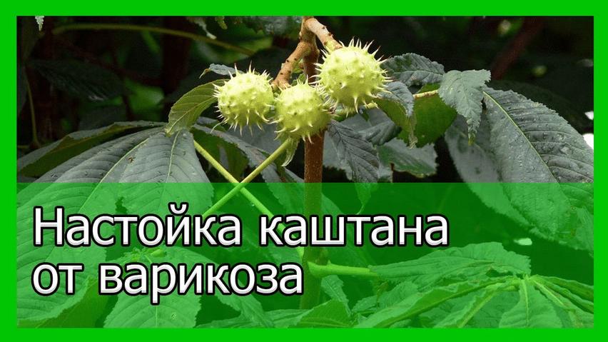 Рецепт приготовления настойки из каштанов от варикоза вен